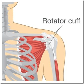 Shoulder Pain Broomall PA Rotator Cuff Injury