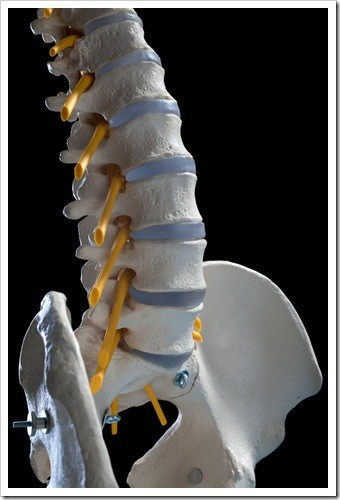 Herniated Disc and Back Pain Hattiesburg MS